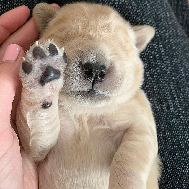 High Five Its The Weekend Puppies Eyes Open 10 14 Days