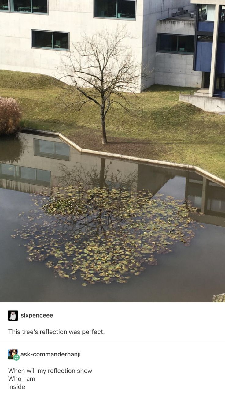 perfect tree reflection