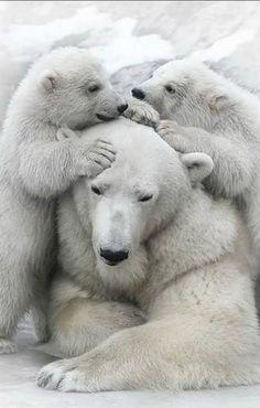 This is my mom...is mine too !! Precious polar bears.