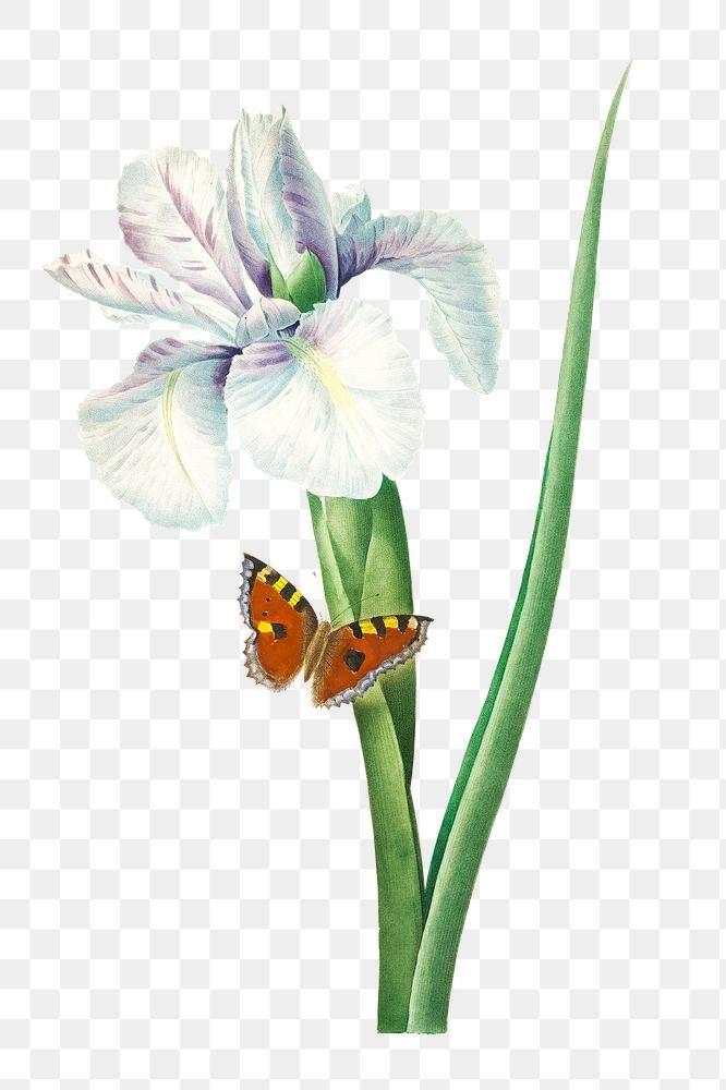 Spanish Iris Flower Sticker Overlay Design Element Free Image By Rawpixel Com Iris Flowers Watercolor Illustration Free Illustrations