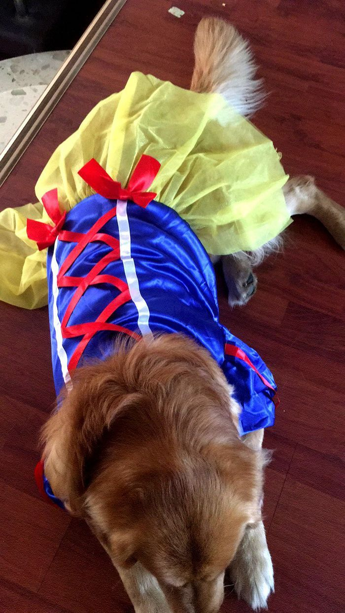 19 Big Dog Dresses Princess Skirt Golden Mao Samoyahashi Pet Summer Skirt Amazon In 2020 Pet Supplies Wholesale Dog Food Storage Dog Costumes Funny