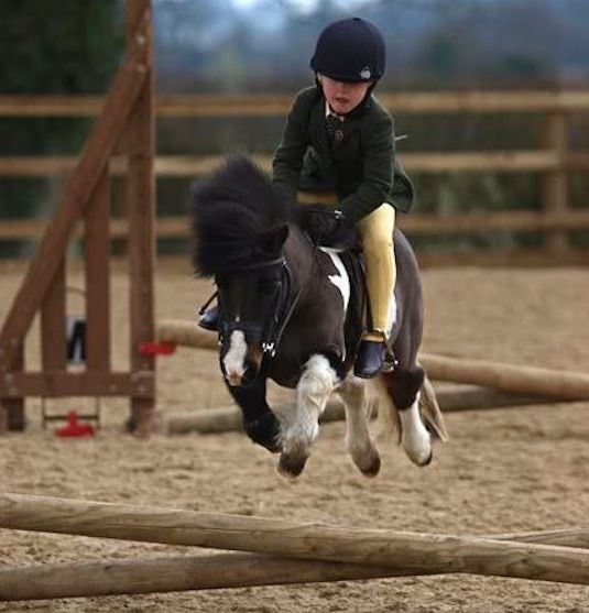 1000 Images About Breeds Of Miniature Horses On Pinterest
