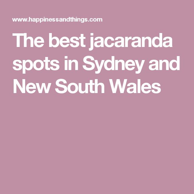 The best jacaranda spots in Sydney and New South Wales