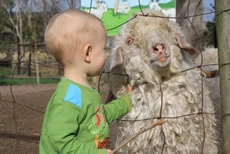 Animal Touch Farms  Live out your farm fantasy as you watch the kids pat and feed some furry friends at one of the touch farms around town.