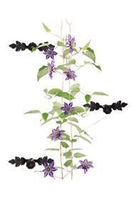 Három darabos öntöttvas növény kitámasztó szett. Az egyes darabokat fel tudjuk szerelni különböző magasságban a falon.Egy kitámasztó mérete: magasság: 4 cm, szélesség: 17 cm, mélység: 9 cmSúlya: 0,48