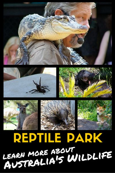 This is the place near Sydney to go to learn more about Australia's wildlife in a more intimate ways than the big zoos. Although it is called Reptile Park, it covers much more than just the reptile species. Visit my blog for more info.