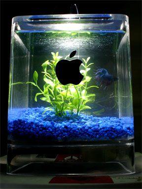 Mac G4 Fish Tank, lol: Aquariums Fish, Craft, Apple Computer, Fish Tanks, Cubes, Apples, Mac, Cube Fishtank