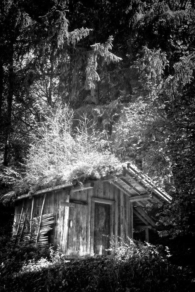 nature - bwstock.photography  //  #forest #cottage