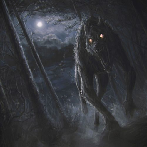 Werewolves Shifters: Best 25+ The Werewolf Ideas On Pinterest