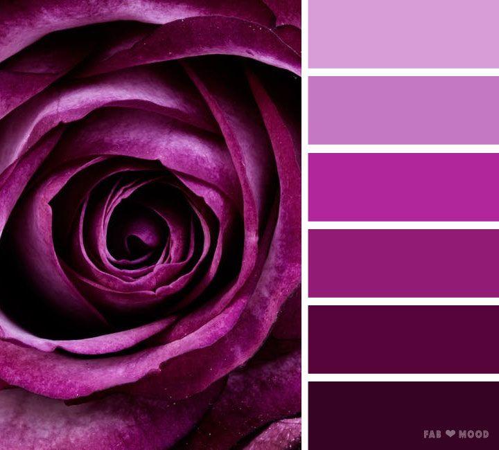 Purple Rose Color Scheme Purple Color Palettes Color Schemes