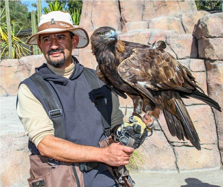 Visita el área de vuelo del Zoológico de Aragón.  ¡Te sorprenderás!