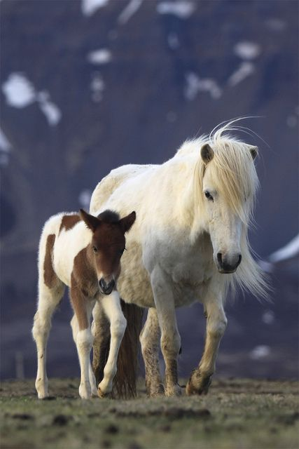 Horse and Foal, By jonrrr