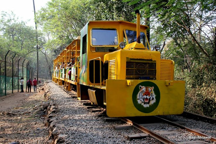 TOY TRAIN IN THE SANJAY GANDHI NATIONAL PARK - MUMBAI