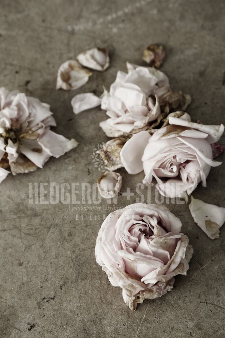 ANTIQUARIAN  Fine Art Photographic Print via Lisa Perhat | Photography | Hedgerow+Stone. Click on the image to see more!