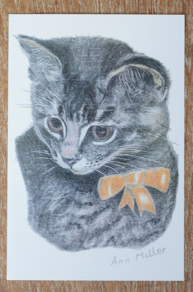 Vintage Cat Postcard Ann Miller Georgie Enterprise Cats 4 90 Grey Kitten Grey Kitten Vintage Cat