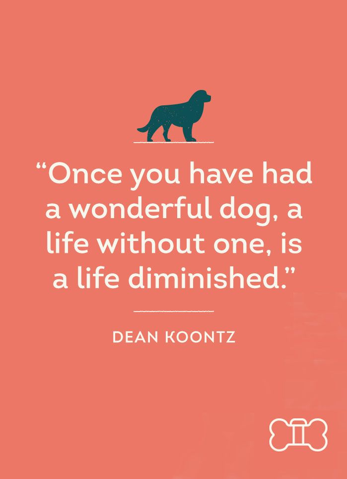 17 Best Images About Quotes For Dog Lovers On Pinterest