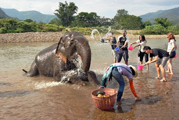 Do you love elephants? Instead of riding one on your next trip be sure you check out the Elephant Nature Park in northern Thailand. >>> This place sounds amazing, the photos are awesome and the elephants are so well cared for and happy. I'd love to visit this place myself. :)