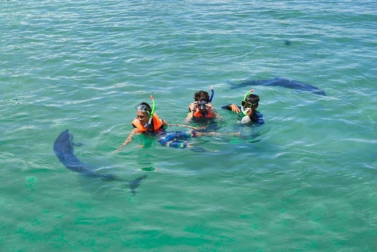 Swim With Dolphins Punta Cana. Departure will be by bus from your hotel to our beach, our instructors will welcome you and will give you all the explanations and the smooth running to follow along with our fantastic companions are the dolphins.