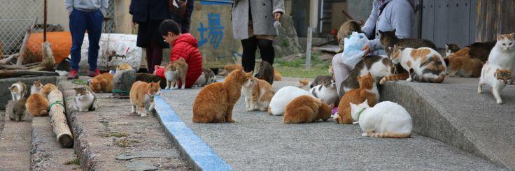 猫の捕獲のご苦労|猫の島 青島物語