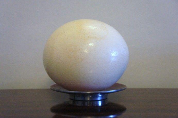 Ostrich egg shell decorative ♦♦ Uova di struzzo svuotate  23€