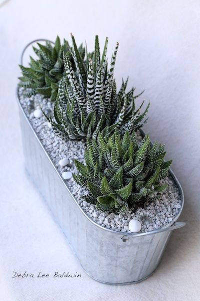 Most succulents are light-lovers, but a surprising number prefer bright shade and do well as windowsill plants. Among these are striped zebra plants (haworthias) and kalanchoes that bloom in every warm hue. As I explain how to select and care for your indoor, low-light lovelies, we'll make a dish garden perfect for an office, apartment or shady garden alcove <3