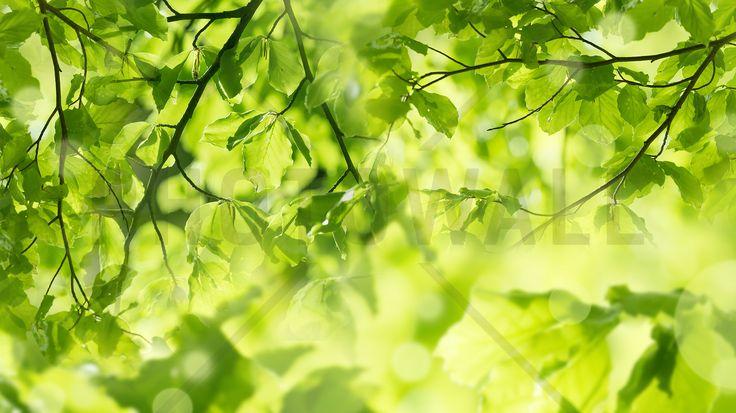 Fresh Leaves and Sun Rays - Fotobehang & Behang - Photowall
