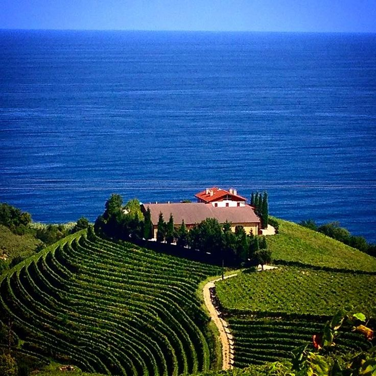Getaria vineyards