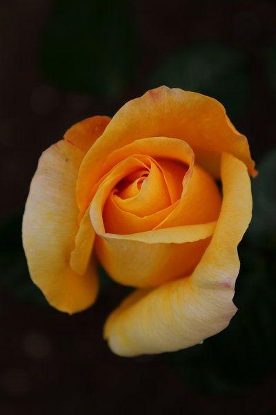 livraisons de fleurs pas cher  310 #fleurs #bouquet