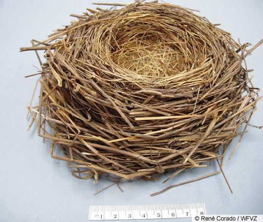 Google Image Result for http://www.allaboutbirds.org/guide/PHOTO/LARGE/song_sparrow_nest.jpeg