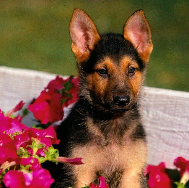 Puppy dog in a basket