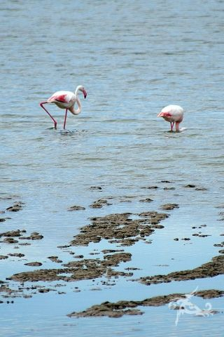 *** Best of mythirdblog.de *** Fernweh-Fotos - einfach so! Hier: Flamingos in der Camargue