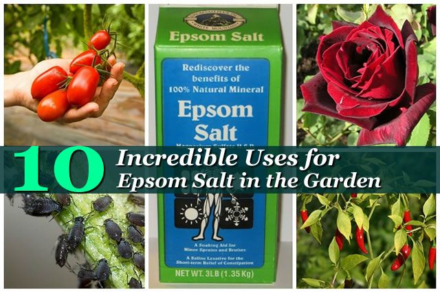 17 best images about gardening and shade gardening on pinterest gardens vegetables and the shade for How to use epsom salt in garden