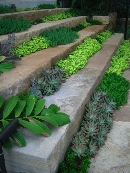 Plant stairs with succulents - this actually works very well, the succulents thrive on the heat from the stone in summer. If you periodically wash the stairs off with a hose, that's enough water for the plants.