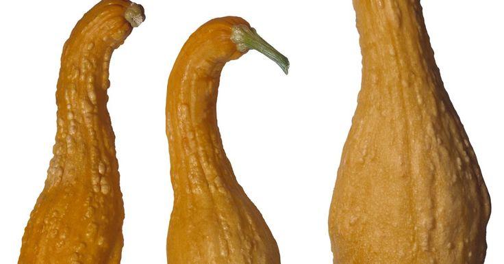 Cómo preparar un calabacín amarillo. La forma inusual y el color brillante del calabacín amarillo de cuello encorvado lo hace destacarse entre las verduras del verano. Como los otros calabacines del verano, los zucchini y las calabazas de cuello derecho, es una estrella de bajas calorías, apenas unas 20 por taza. Contiene vitamina C y B6, minerales y fibra dietaria, principalmente en ...