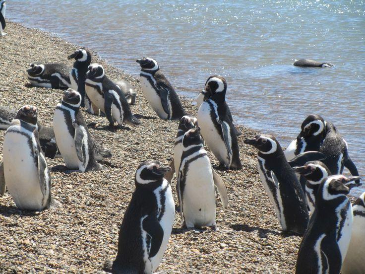 Peninsula Valdez en Puerto Madryn. Turistas pueden ver los pingüinos.