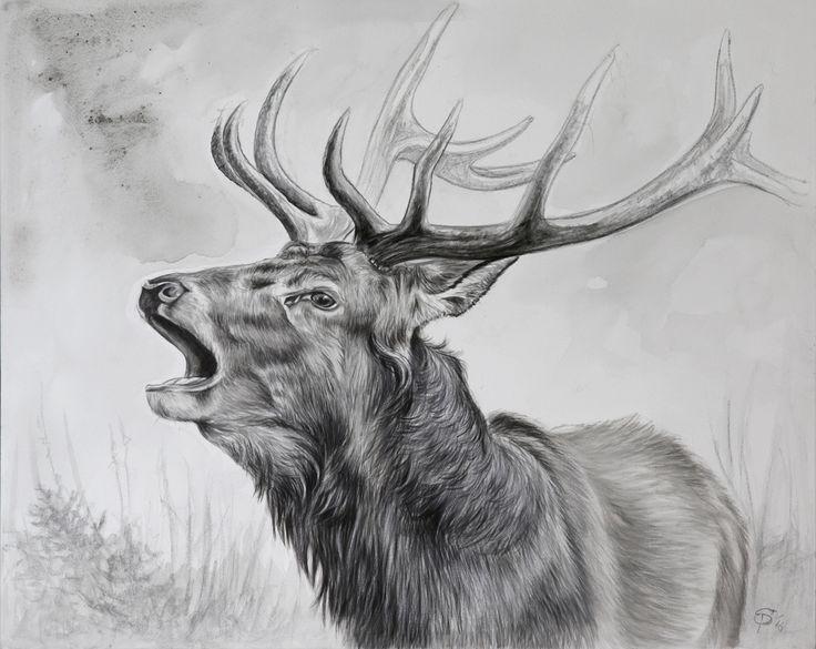 Portrait von einem röhrenden Hirsch.  Portrait of a belling stag.