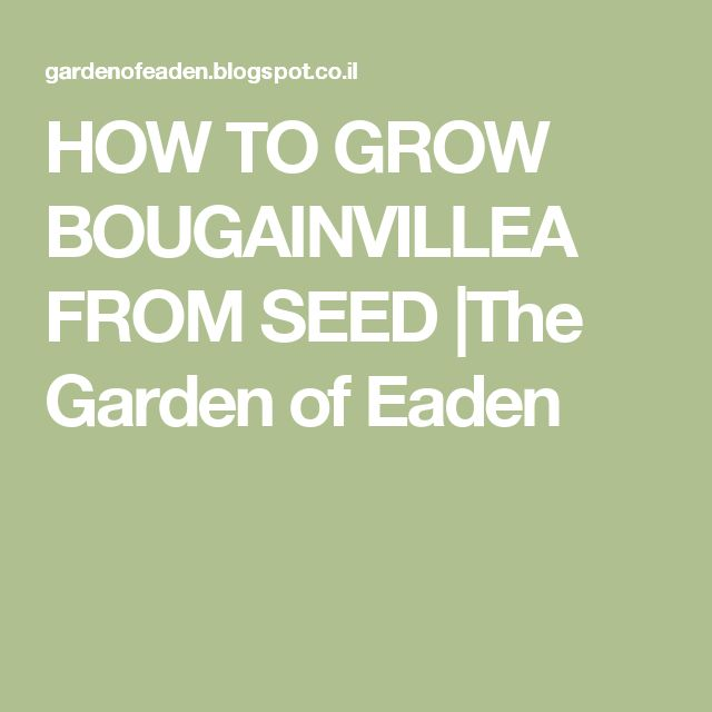 HOW TO GROW BOUGAINVILLEA FROM SEED |The Garden of Eaden