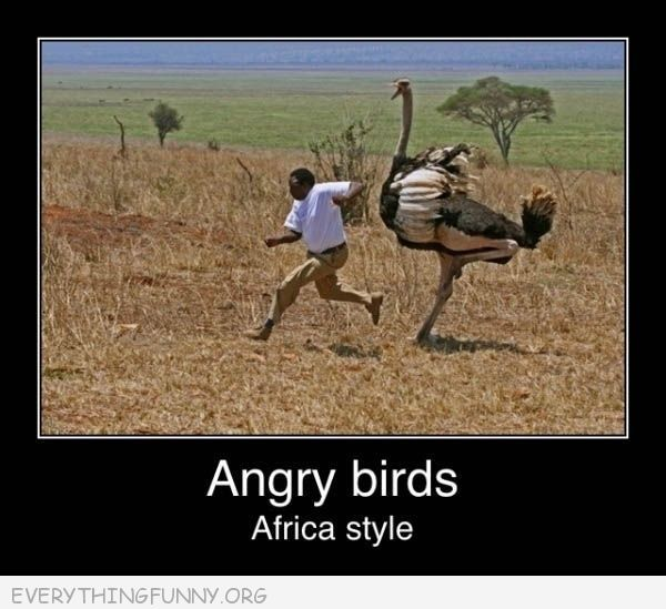 funny caption angry birds africa style