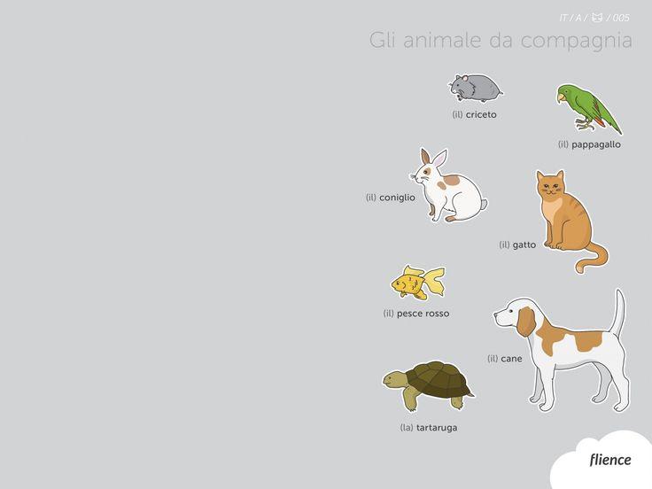 Animals-pets_005_it #ScreenFly #flience #italian #education #wallpaper #language