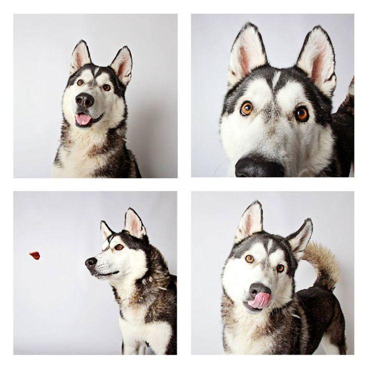humane society of utah photo booth dog pics to increase adoption (14)