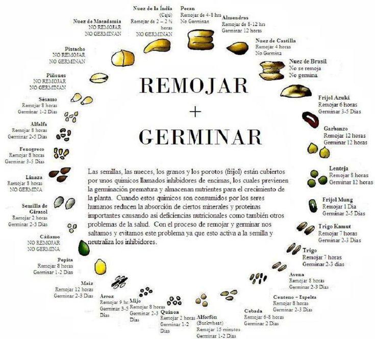 Optimal times for growing & watering different seeds / Tiempos optimos de remojo y germinacion de diferentes semillas