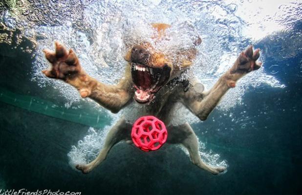 underwater dogs (by Seth Casteel)