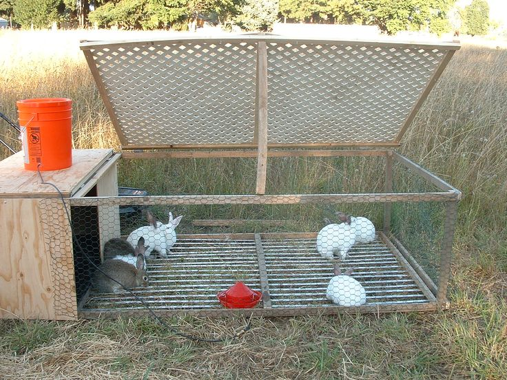 rabbit tractor, I like the idea of raising them on pasture, not in metal cages with drop pans. Even if they are intended for food, they should have a happy life nibbling on grass and clover until harvesting.