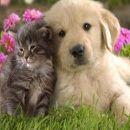 Remedios caseros para evitar y eliminar pulgas en perros y gatos de forma natural ecoagricultor.com