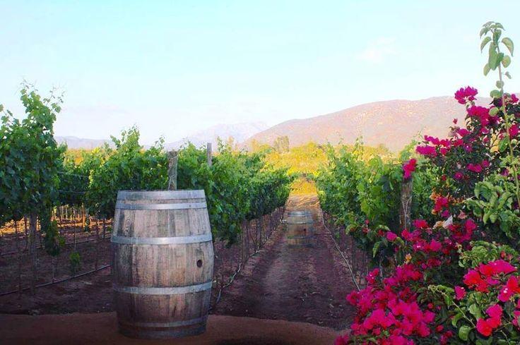 Natural y encantador así es Valle de Guadalupe ☺️ #Ensenada #MiAlmaGemela #BajaCalifornia #DiscoverBaja #DescubreBC #EnjoyBaja #DisfrutaBC #Baja #BC #ValleDeGuadalupe #México #BajaMexico #Vino #Wine #ExploreBaja Conoce más sobre la Ruta del Vino visitando: www.descubreensenada.mx  Aventura por claudiappaur
