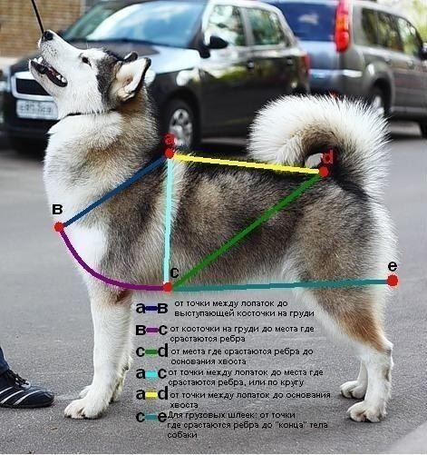 Шлейка своими руками для собаки пошаговая инструкция