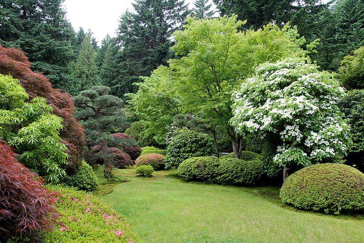 Фото древесно кустарниковые композиции