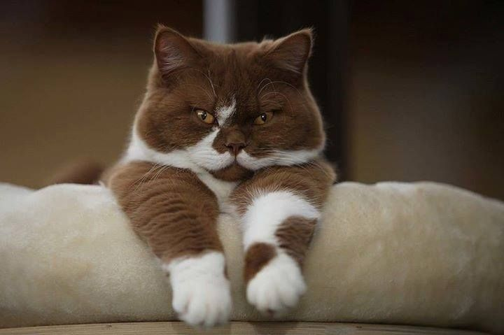 Cat with mustaches #Fun #MakeMyDay #Cat