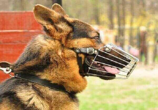 dogs #barking #big #little #loud dog #mp3 #sound #effect dog
