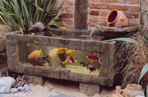 Elmdene sea chest patio aquarium dream home pinterest for Outdoor aquarium uk